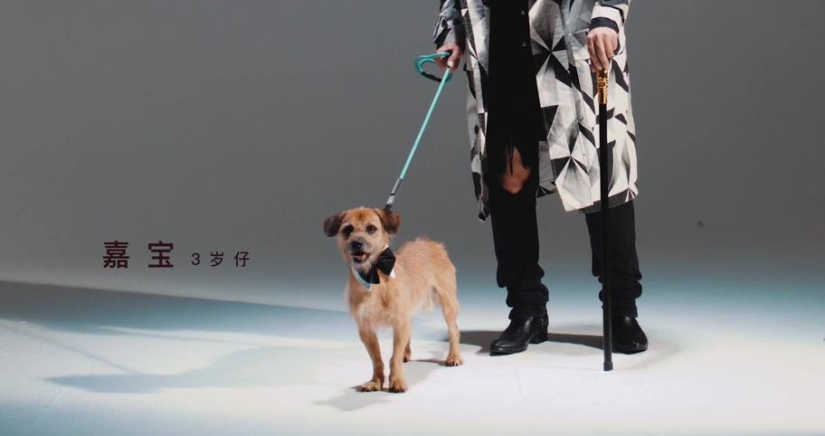 [2K] pop,安大魂,一指团体Afinger - 不再流浪 官方HD-MV